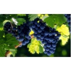 Экстракт винограда-гладкая кожа