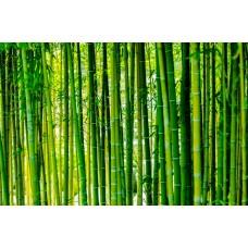 Экстракт Бамбука-увлажняет кожу